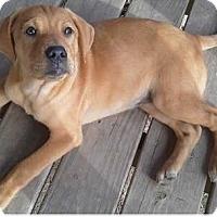 Adopt A Pet :: Penny, Payton, & Paisley - Morgantown, WV