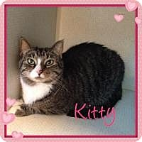Adopt A Pet :: KITTY - Hamilton, NJ