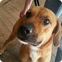 Adopt A Pet :: Rocky - Toledo, OH