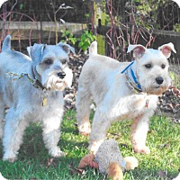 Adopt A Pet :: Brody and Kirby~~ADOPTION PEND - Sharonville, OH