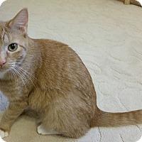 Adopt A Pet :: Scarlett - Garland, TX