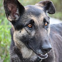 Adopt A Pet :: Shya - San Diego, CA