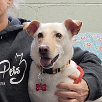 Adopt A Pet :: Bella - Long Beach, NY