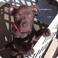 Adopt A Pet :: Brenna - HAGGERSTOWN, MD