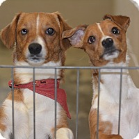 Adopt A Pet :: Butters - Greensburg, PA