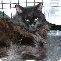 Adopt A Pet :: Knight - Stafford, VA