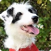 Adopt A Pet :: Alena - San Francisco, CA