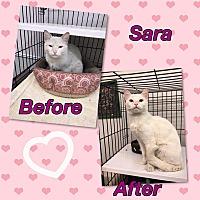 Adopt A Pet :: Sara - Atco, NJ