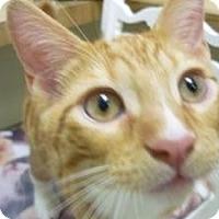 Adopt A Pet :: Elm - Milwaukee, WI