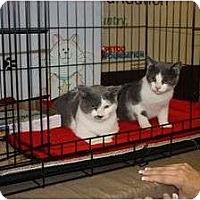 Adopt A Pet :: Max & Maxcine (sc) - Little Falls, NJ