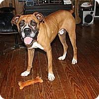 Adopt A Pet :: Barley - ARDEN, NC