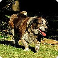 Adopt A Pet :: HAPPY-GO-LUCKY - Phoenix, AZ