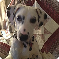 Adopt A Pet :: Abby-ADOPTED! - Grove City, OH