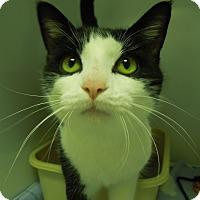 Adopt A Pet :: George - Medina, OH