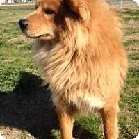 Adopt A Pet :: R.C. - Quinlan, TX