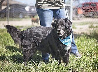 Retriever (Unknown Type) Mix Dog for adoption in Iola, Texas - Duke