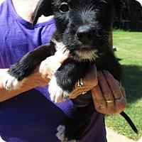 Adopt A Pet :: FREDDIE - Brookside, NJ