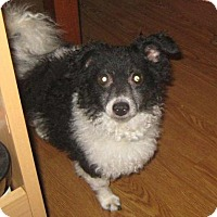 Adopt A Pet :: Ziggy-adoption pending - Mississauga, ON