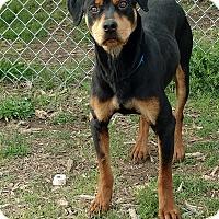 Adopt A Pet :: Rex - Newberry, SC