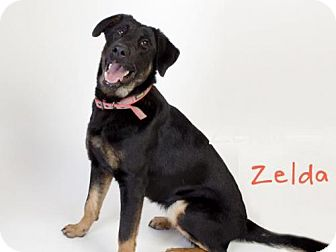 German Shepherd Dog Mix Dog for adoption in Sacramento, California - *ZELDA