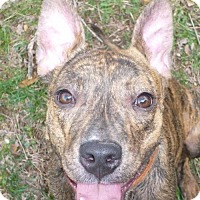 Adopt A Pet :: Lexi - Foristell, MO