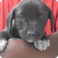 Adopt A Pet :: Rafferty - Gulfport, MS