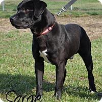 Adopt A Pet :: Sarge - DuQuoin, IL