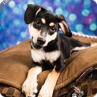 Adopt A Pet :: Tammy - Ottawa, KS