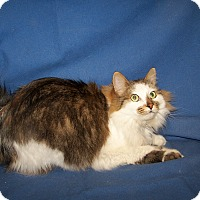 Adopt A Pet :: Sonya - Colorado Springs, CO