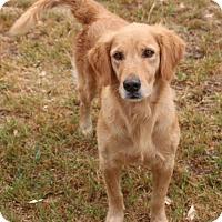 Adopt A Pet :: Gina - Pipe Creed, TX