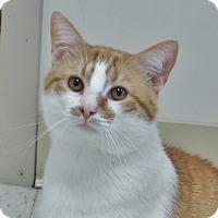 Adopt A Pet :: Jessie - Chambersburg, PA