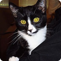 Adopt A Pet :: Indiana - Vancouver, BC