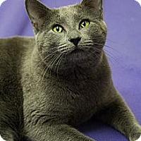 Adopt A Pet :: Wesley - Chicago, IL