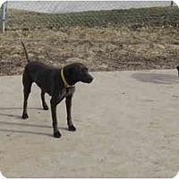 Adopt A Pet :: Kayo - Wahoo, NE