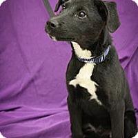 Adopt A Pet :: Bensen Burner - Broomfield, CO