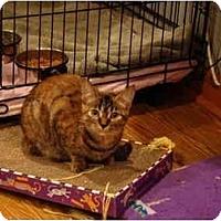Adopt A Pet :: Aerial--PETSMART - Muncie, IN