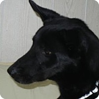 Adopt A Pet :: Clyde ADOPTION PENDING!! - Antioch, IL