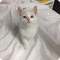 Adopt A Pet :: Emmett - Maywood, NJ