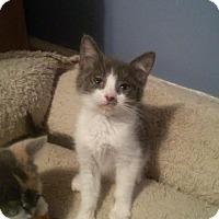 Adopt A Pet :: Gumbo - McDonough, GA
