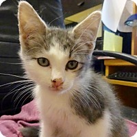 Adopt A Pet :: Bailey -Adoption Pending! - Colmar, PA