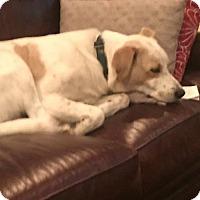 Adopt A Pet :: Atticus CP - Providence, RI
