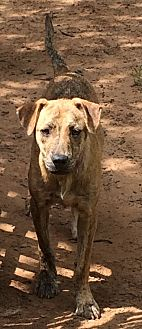 Fox Terrier (Smooth) Mix Dog for adoption in Blanchard, Oklahoma - Tommy