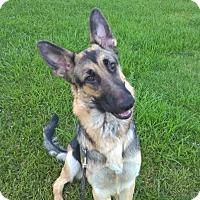 Adopt A Pet :: Angelique - Houston, TX
