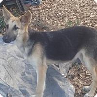 Adopt A Pet :: Nala - Pensacola, FL