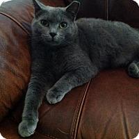 Adopt A Pet :: Bear - St. Cloud, FL