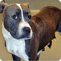 Adopt A Pet :: Daisy - Wildomar, CA