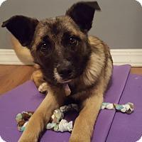 Adopt A Pet :: Bindi - Aurora, IL