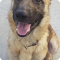 Adopt A Pet :: SARA-17 - Lithia, FL