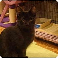 Adopt A Pet :: Spook - Muncie, IN