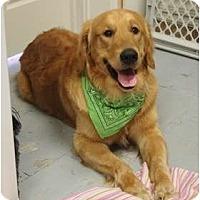 Adopt A Pet :: Bertram - Ocean City, NJ